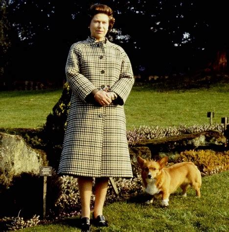the queen s corgis queen to stop breeding beloved corgis after more than half