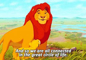 lion king disney gif find share  giphy