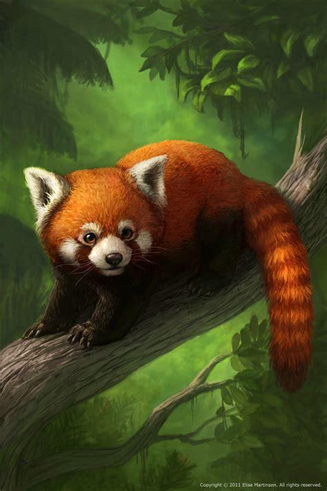 iphone  red panda wallpaper wwwelisemartinsoncom