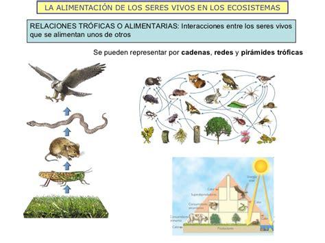 cuantas cadenas troficas hay en esta red la estructura de los ecosistemas 2011