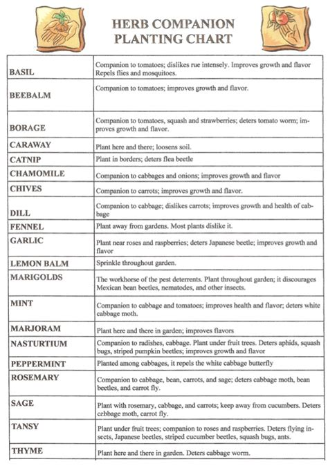 herb growing chart vegetable companion planting chart pattysplants