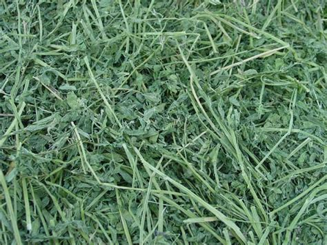 Alfalfa Hay Oxbow hay carolina pet supply quality supplies for raising
