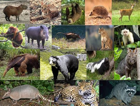 imagenes animales mamiferos animalnature mam 237 feros terrestres acu 225 ticos y voladores