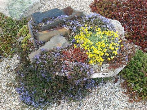 piante da giardino roccioso giardino roccioso stili di giardini