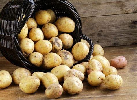 mille modi per cucinare le patate le patate