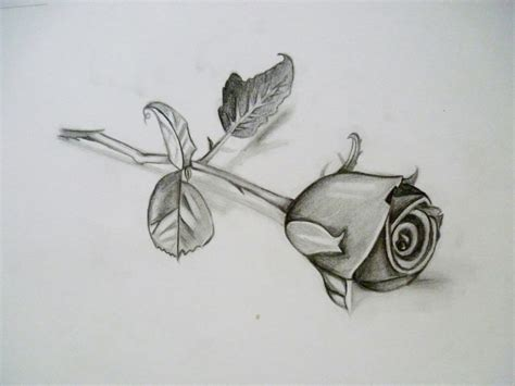 pencil drawings charcoal drawings and art galleries rose photos 3d pencil drawings of roses drawing art gallery