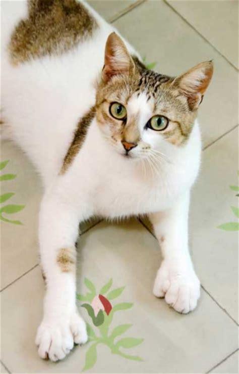 banana kitten named orfey cats hemingwayhome cats