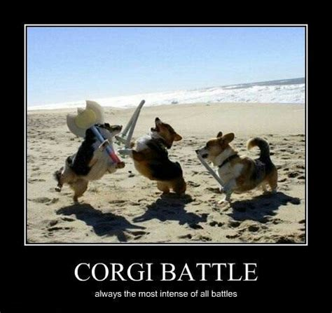 Corgi Birthday Meme - pisces pictures cost of living continued