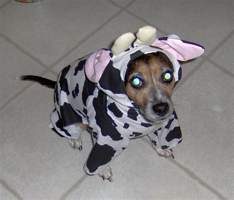 cow puppy other in cow costume by alisonblackcat on deviantart