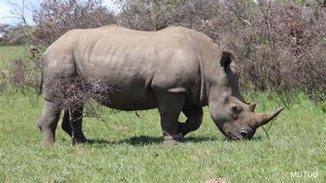 imagenes animales salvajes africa vivir y trabajar en una reserva de animales mutuo