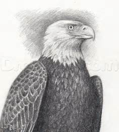 how to sketch a bald eagle step by step birds animals