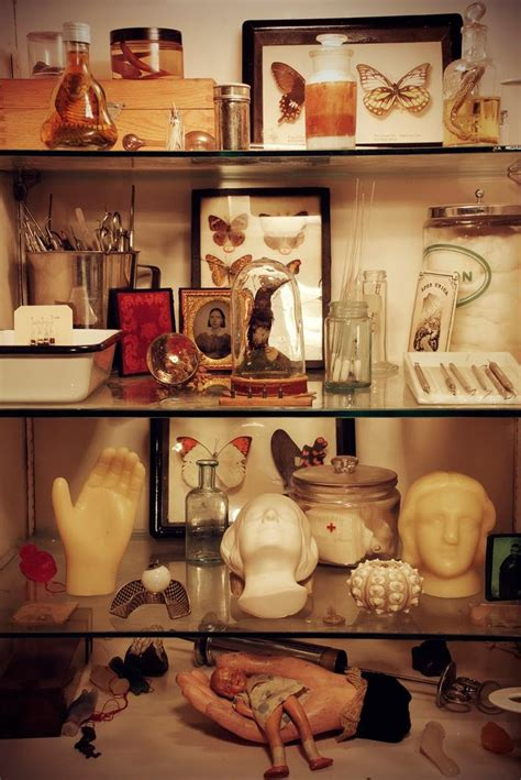 cabinet of curiosities book 17 best images about cabinet of curiosities on pinterest