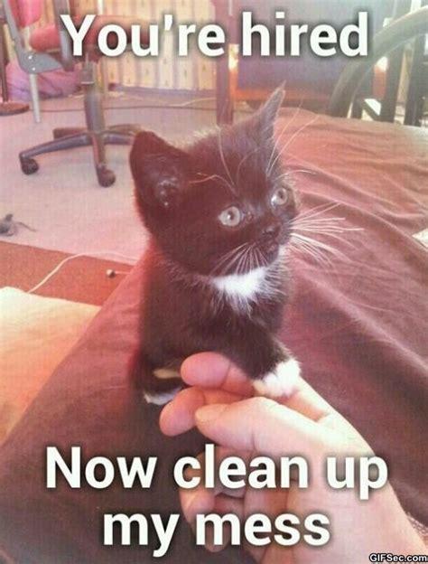Cute Kitten Memes - pics photos cat memescat memes 25 cute and badass funny