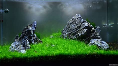 aquascape wallpaper aquascape wallpaper 28 images 2007 aga aquascaping