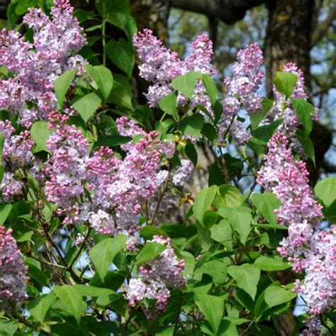shrubs that flower all year 17 best images about to prune when to prune what