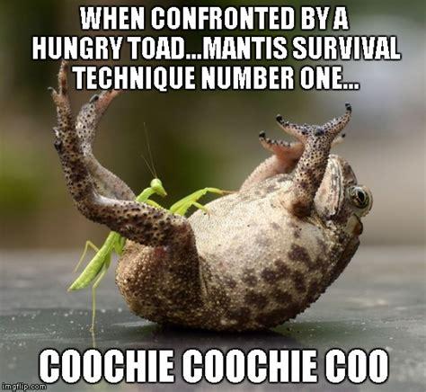 Mantis Meme - praying mantis imgflip