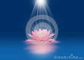 Lotus Lite Pink Lotus With Light Beams Stock Images Image 35084874
