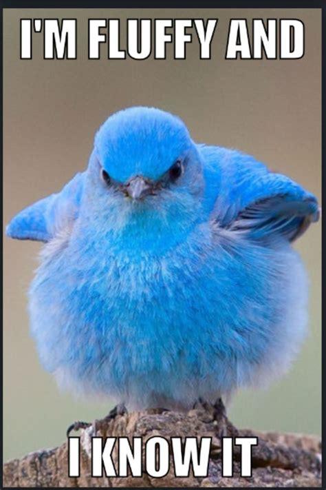 Meme Bird - pin by miranda raymond on the funnies pinterest
