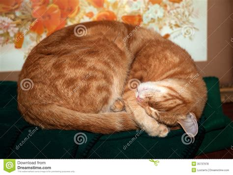 Sleeping Orange Cat orange cat sleeping royalty free stock photos image