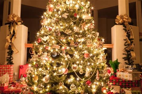 how many lights per of tree s worst trees 12 festive displays that