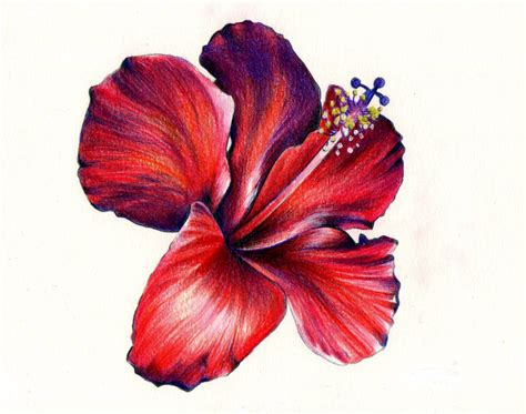 hibiscus tattoo red hibiscus flower design
