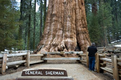general sherman tree sequoia national park in california 301 moved permanently
