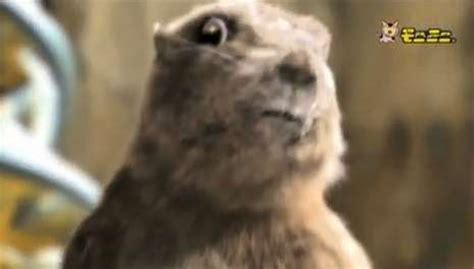 Dramatic Squirrel Meme - dramatic chipmunk meme generator image memes at relatably com