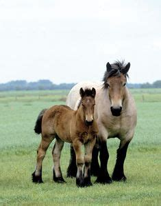 animals: a horse in general on pinterest | draft horses