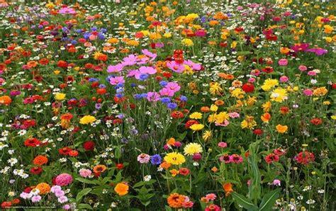 simboli dei fiori sognare fiori significato e simbolismo dei fiori nei sogni