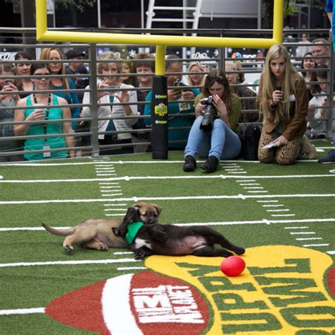 when does the puppy bowl start who cares about football when the puppy bowl comes to arizona travel hymns