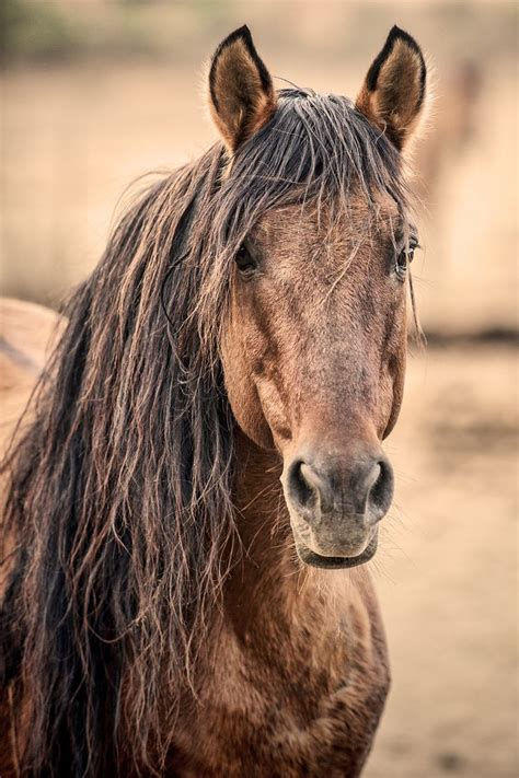 Diskon Pony Browm By Sweety 46 best brown horses images on pretty horses beautiful horses and sweetie