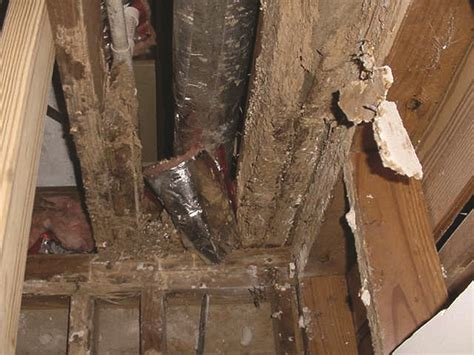 Bed Bugs In Bathroom Termite Structural Damage Heavy Damage From Termite