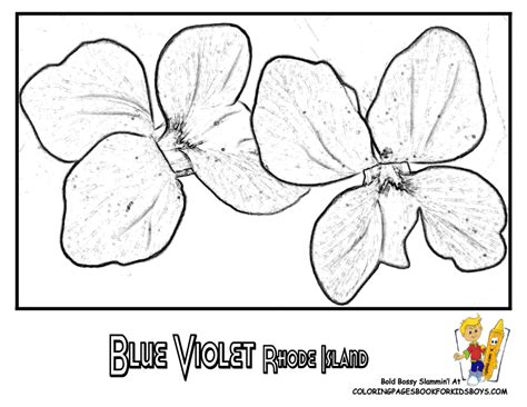 coloring pages of rhode island rhode island flower coloring pages and violets on pinterest