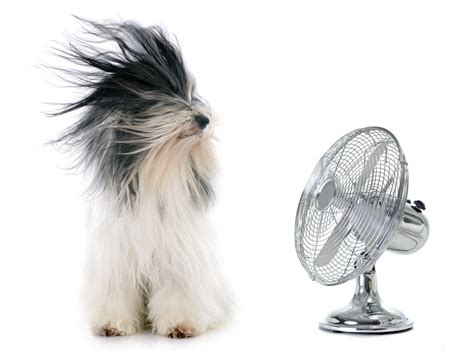 fan in the weather is here how to stay cool in the heat per my