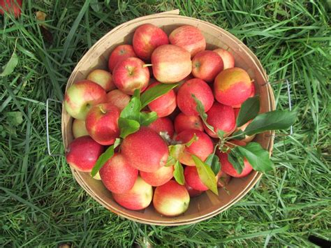 edwards apple orchard wedding 21 best images about rustic fall wedding on