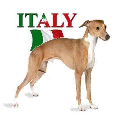 italian word for puppy image gallery italian names