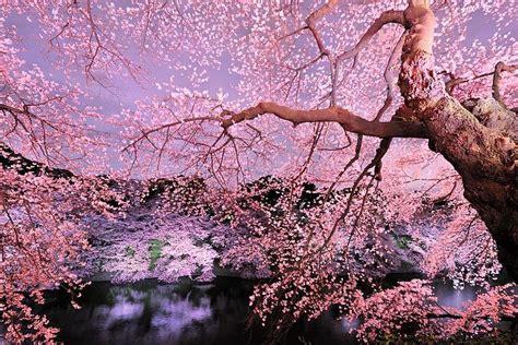 ste giapponesi fiori natura perla di luce pagina 6