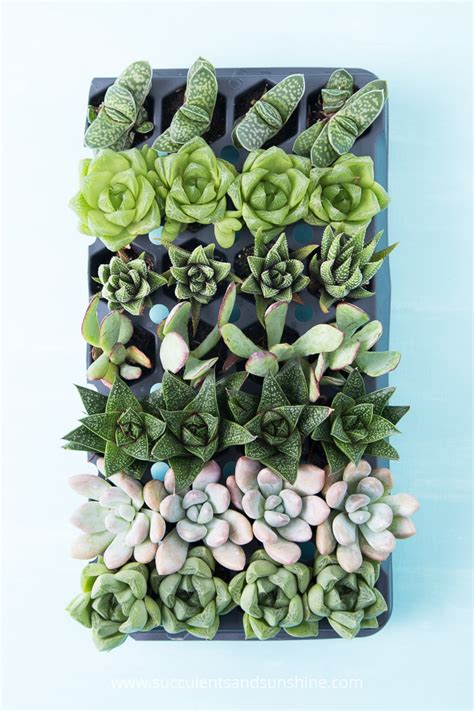 Whats New At The Succulent by Gift Guide For Indoor Succulent Growers Succulents And