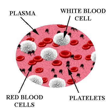 what color are platelets difference between blood cells and platelets