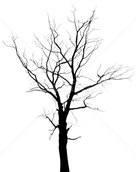silhouette of dead tree without leaves vector illustration