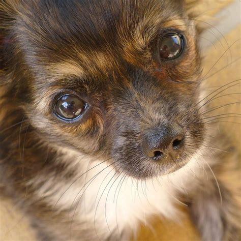 encephalitis in dogs encephalitis brain inflammation in dogs canna pet