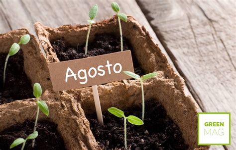 cosa piantare in giardino cosa piantare ad agosto green mag
