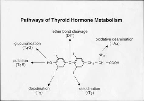 Catabolic Phase Detox by Metabolism Of Thyroid Hormonethyroid Disease Manager