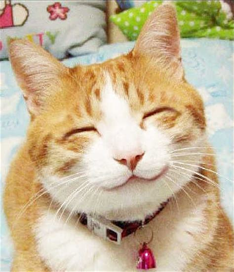 cat content 4 – @gillyberlin
