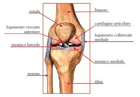 dolore ginocchio interno anteriore il ginocchio