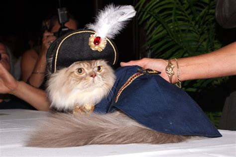 cat fashion the absolute cat