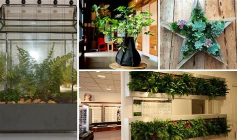 innovative fun indoor planter ideas