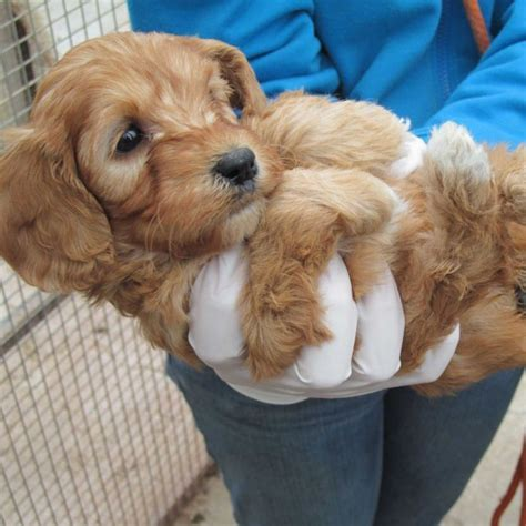 abc puppy dogs on puppy farm kept in absolute state of neglect rspca says abc