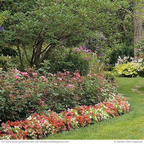 Garden Begonia Wax Begonia Garden Gate Enotes