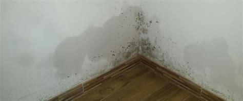 come togliere la muffa dal soffitto muffa soffitto muffa ponte termico muffa al soffitto
